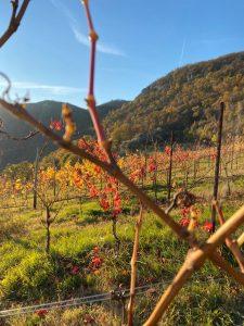 vineyards walk tour experience