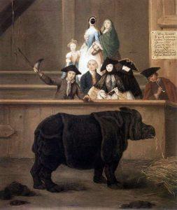 rinoceronte pietro longhi
